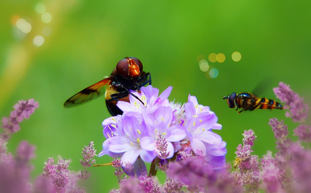 bugs and flowers